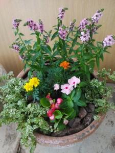 みくに園芸 寄せ植え 2